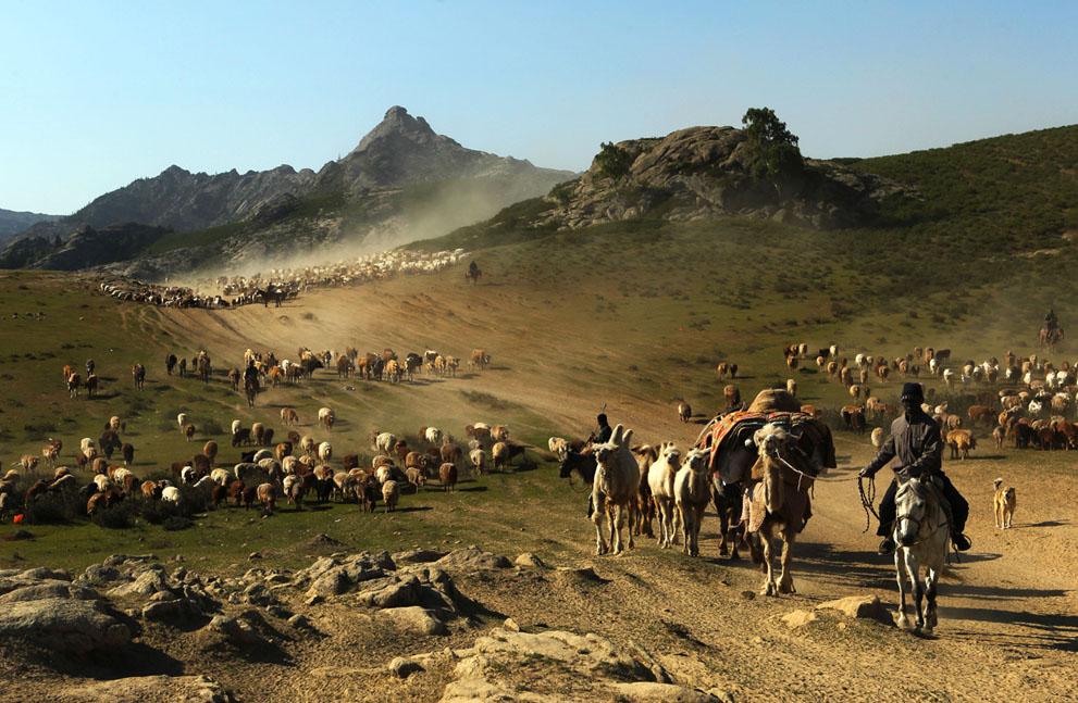 На великолепном панно изображены стада животных с пастухами