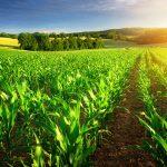 Скифы-земледельцы. Феодосия, часть 9