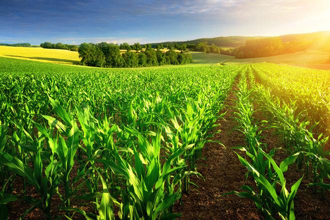 На фото поля урожая. Скифы-земледельцы