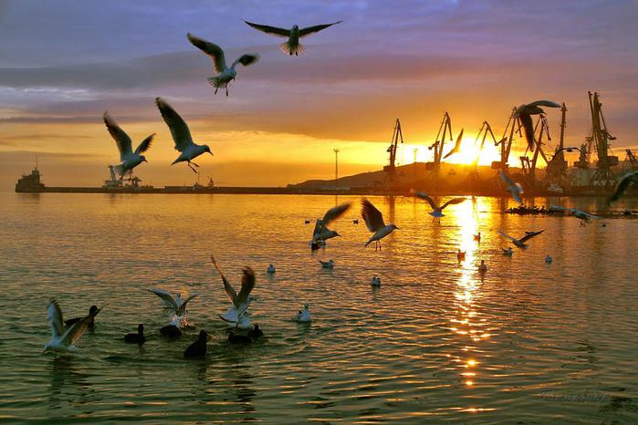 На фото: закат в Феодосии и чайки