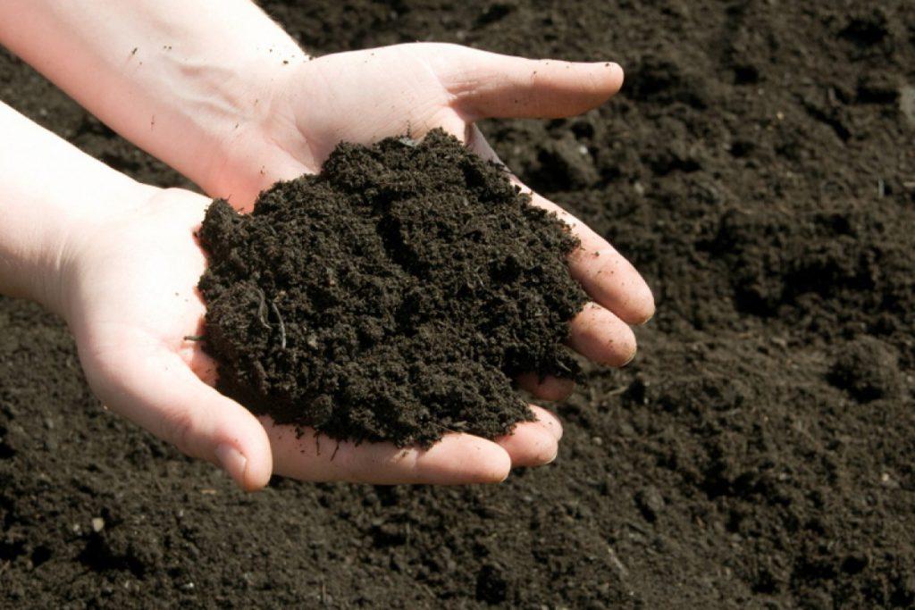 На фото плодородная почва в руках человека