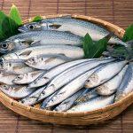 Рыболовство в Херсонесе в Римский период, часть 20